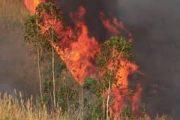 الرئيس البرازيلي يعلن إرسال قوات لمواجهة حرائق الأمازون بعد ضغوط اوروبية